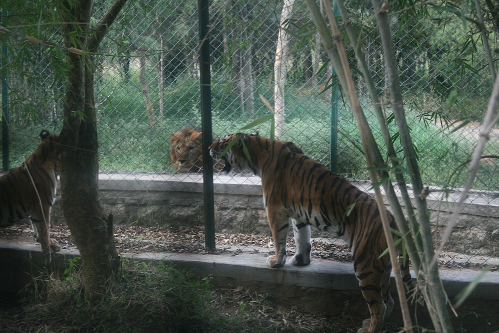 Bannerghatta National Park Safari Timings Entry Fee