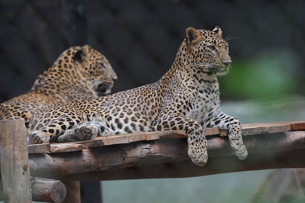 Mysore Zoo | Timings, Images, Animals, Tickets & Park